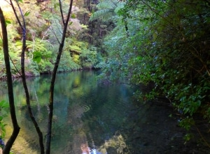 The Queen Charlotte track